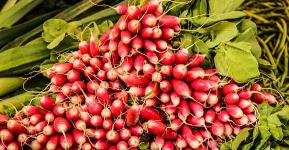 Alimentos orgânicos: qualidade nutritiva e segurança do alimento
