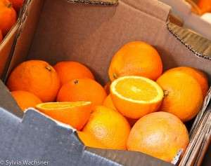 Produção de laranja orgânica no Brasil