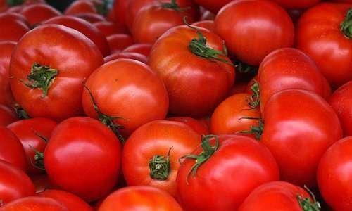 Produtos para controle de insetos vetores de fitoviroses no tomate