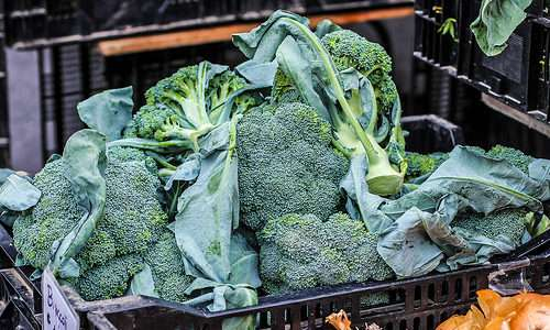 Veja como é a produção de alimentos orgânicos