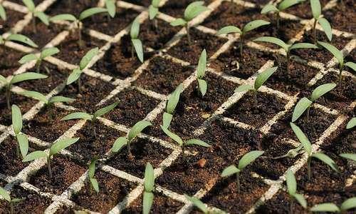 Regulamento técnico para produção de mudas e sementes orgânicas