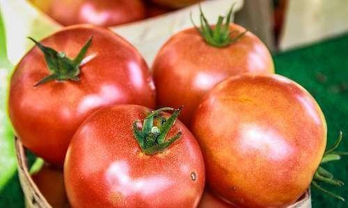 Como se tornar produtor orgânico