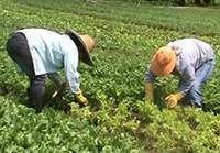 Portfólio de tecnologias de agricultura orgânica e agroecologia