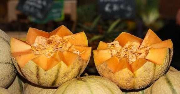 Pós-colheita de melão orgânico submetido à aplicação de doses de biofertilizante