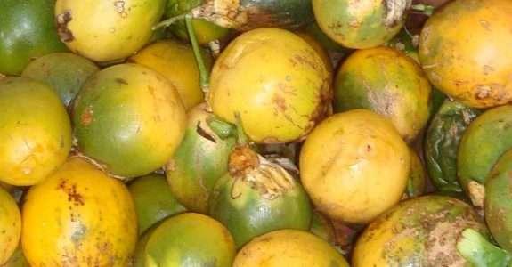 Suco de maracujá orgânico processado por microfiltração