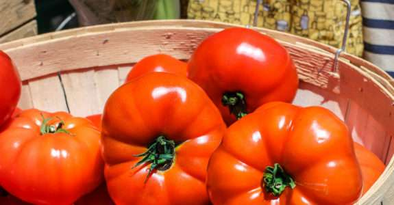 Controle biológico da traça-do-tomateiro em sistema orgânico de produção