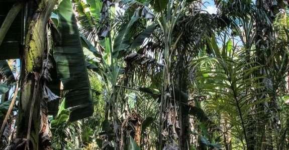 Propriedades edáficas em áreas sobre manejo orgânico