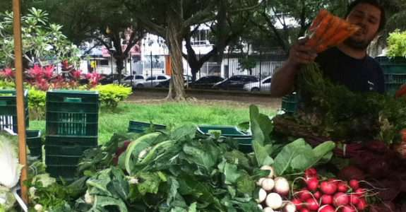 Desafios para a produção orgânica do Estado do Rio de Janeiro