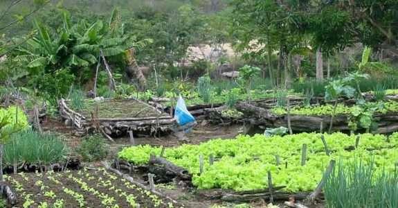 Editais fomentam agroecologia com foco na agricultura familiar
