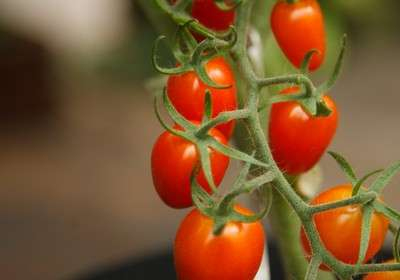 9 motivos para usar fungo trichoderma na agricultura orgânica
