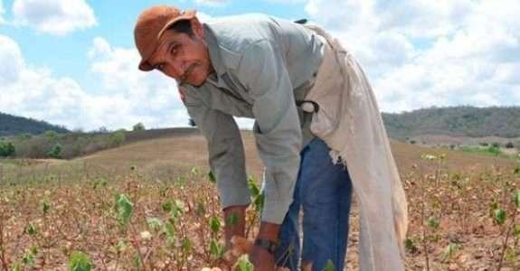 Agricultura orgânica: alternativas e desafios nos assentamentos (PB)