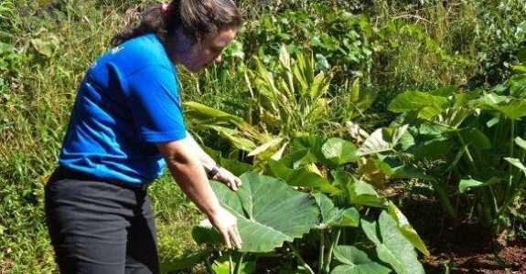 Sistema de agroflorestas é mais vantajoso na produção de orgânicos