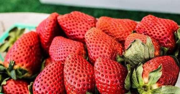 Análise da cadeia produtiva de frutas orgânicas, SP