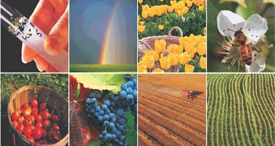 Mercado de defensivo agrícola biológico tem excelentes perspectivas no Brasil