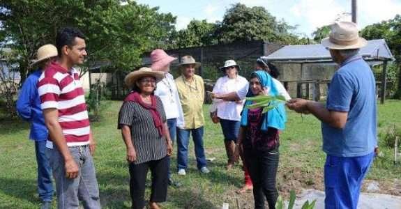 Agricultores orgânicos de cupuaçu conhecem plantios da Embrapa