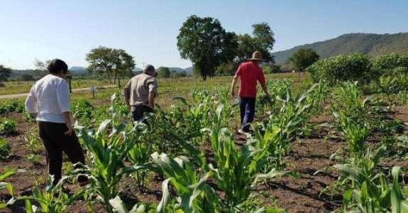 Agrofloresta e alimentos biofortificados: para aprimorar a agricultura familiar no Pantanal
