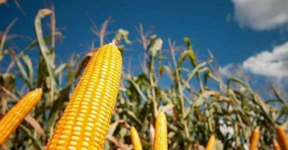 Agrotóxicos e Transgênicos: Impacto sobre a Agricultura Orgânica