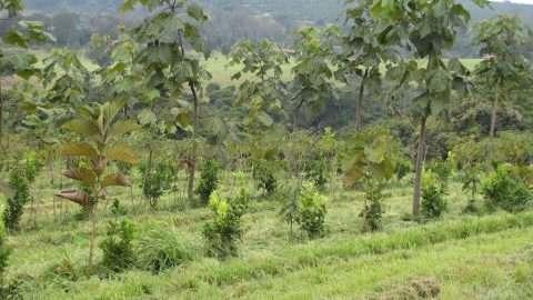 foto: blog Fazenda da Toca