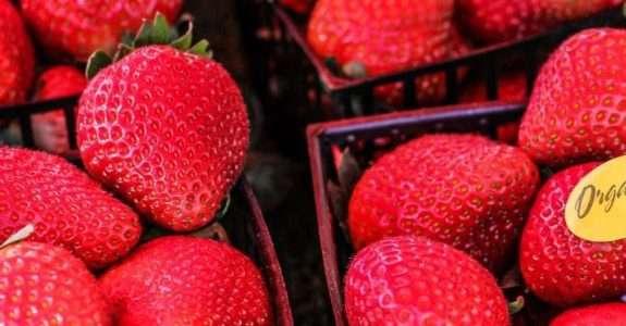Sylvia Wachsner fala sobre alimentos orgânicos em entrevista ao jornal O Fluminense