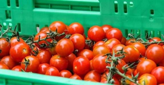 Canais de comercialização de orgânicos: Leste Paulista