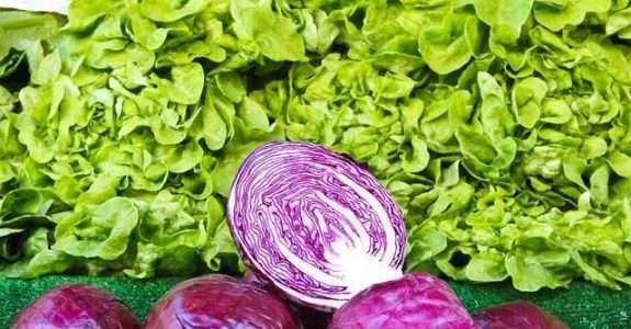 Listagem dos produtos fitossanitários para uso da agricultura orgânica