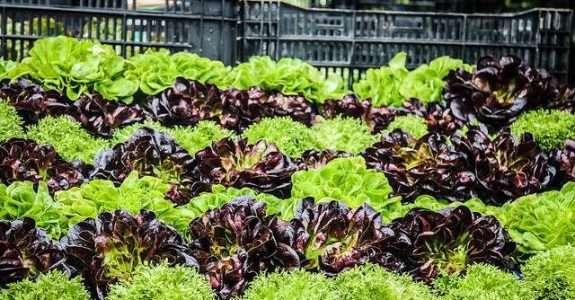 Sylvia Wachsner: investimentos nos orgânicos