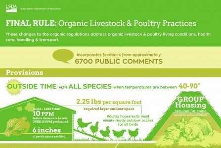Departamento de Agricultura Americano define o futuro da avicultura orgânica