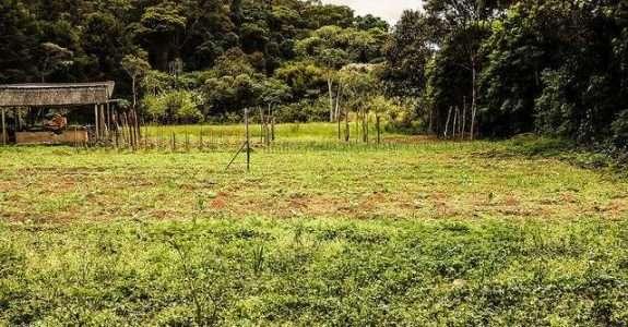 Manejo integrado de plantas invasoras na agricultura orgânica