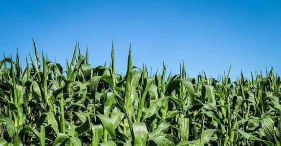 Especialistas analisam novo cenário do setor de alimentos após a crise