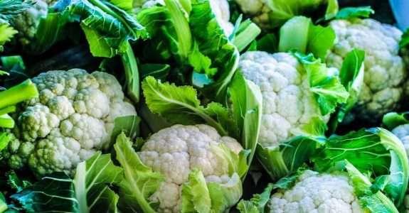 Plano Nacional de Agroecologia e Produção Orgânica