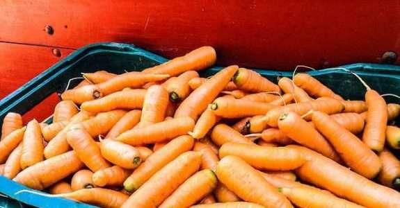 Custo da cenoura em sistema de cultivo orgânico