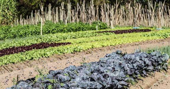 Agricultura orgânica: normas, regulamentos, acesso aos mercados