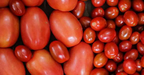 Tomate orgânico: conteúdo nutricional e a opinião do consumidor