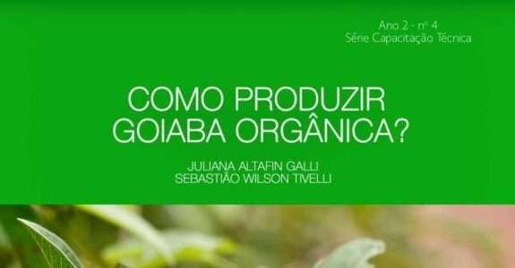 Como produzir goiaba orgânica?