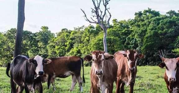 Carne sustentável quer sair do nicho e ampliar vendas