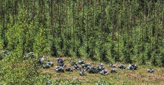 Agroecologia aponta alternativas e novos caminhos para os sistemas convencionais