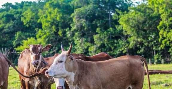Perspectivas para a pecuária orgânica