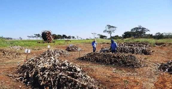 Pesquisadores e agricultores se unem para desenvolver fertilizantes naturais