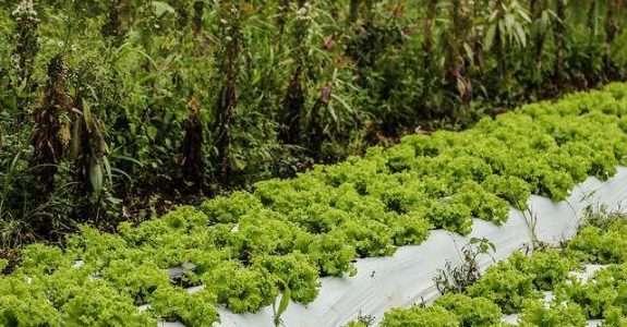 Plano Nacional de Agroecologia e Produção Orgânica – PLANAPO 2016-2019