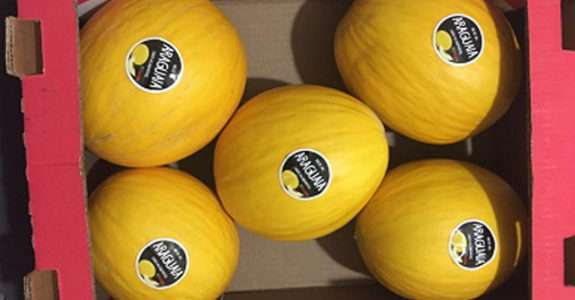 Produção de melão orgânico é destaque