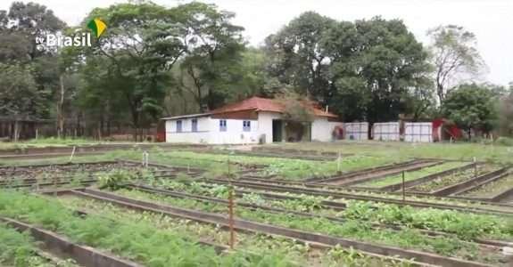 Agro Nacional fala sobre as plantas alimentícias não convencionais