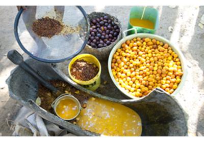 Beraca é eleita empresa mais sustentável do setor químico pelo quinto ano