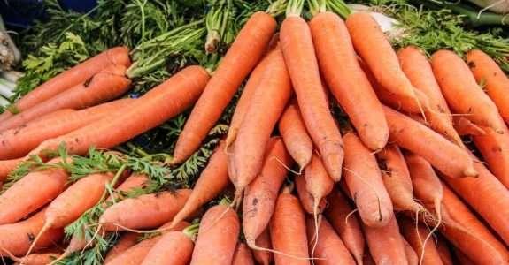 Pesquisa desenvolve primeira cenoura para cultivo orgânico