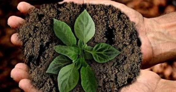 Sustentabilidade poderá trazer bilhões para o agro, afirma especialista